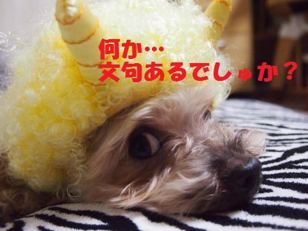 s_P2031662.jpg