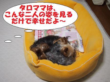 s_PC131182.jpg