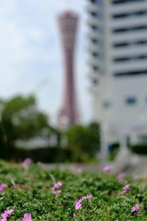 メリケンパークからポートタワー