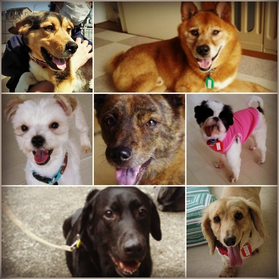 Dogshelter01-1_20130705214825.jpg