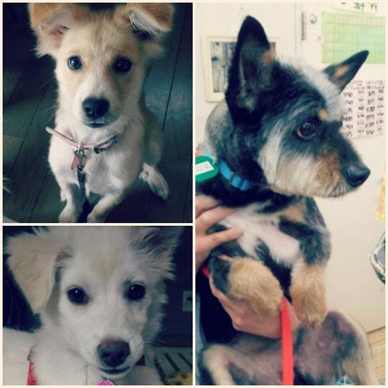 Dogshelter02-2_20130705214826.jpg
