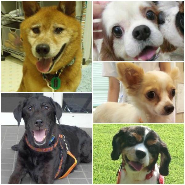 Dogshelter02.jpg