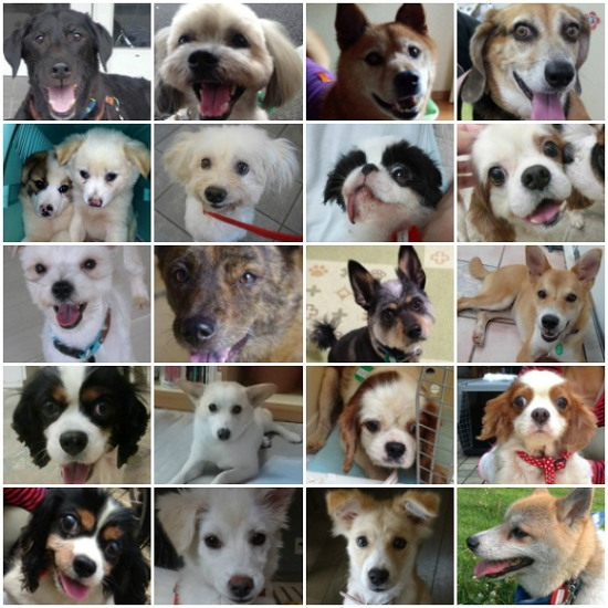 Dogshelter_20130813221721d93.jpg