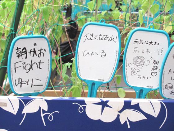 朝顔fight!