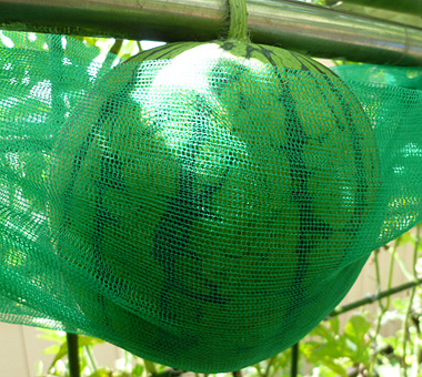 3吊り西瓜