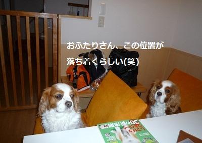 2012_0503_162515-P1130832.jpg