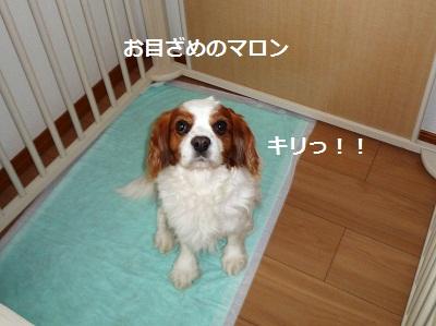 2012_0504_063743-P1130865.jpg