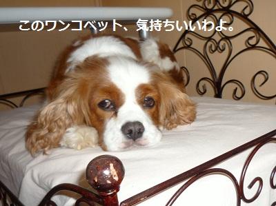 2012_0505_081718-P1130969.jpg