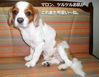 2012_0519_211640-P1140129.jpg