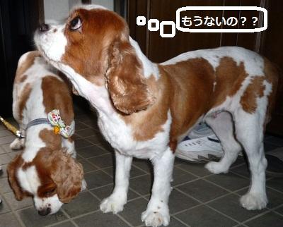 2012_0724_110449-P1140451.jpg