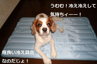 2012_0803_120437-P1140512.jpg