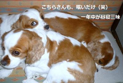 2012_0813_154916-P1140643.jpg