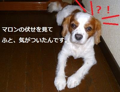 2012_0824_091555-P1140644.jpg