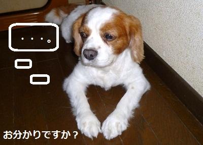 2012_0824_091609-P1140645.jpg