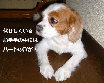 2012_0824_091617-P1140646.jpg