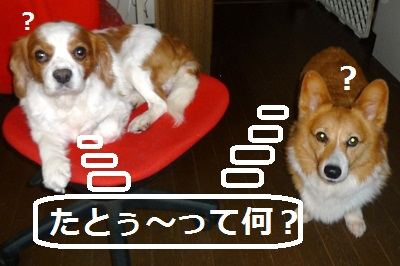 2012_0829_140605-P1140698.jpg