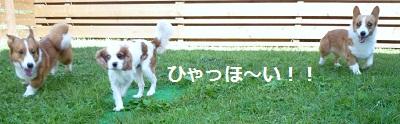 2012_0911_092854-P1140807.jpg