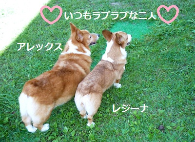 2012_0911_093100-P1140811.jpg