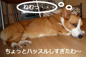 2012_0911_151713-P1140853.jpg
