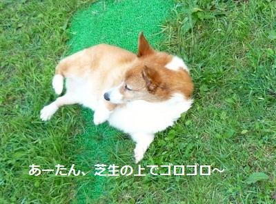 2012_0912_072444-P1140903.jpg