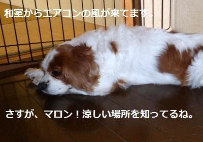 2012_1001_124032-P1140992.jpg