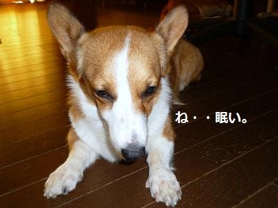 2012_1001_124117-P1140997.jpg