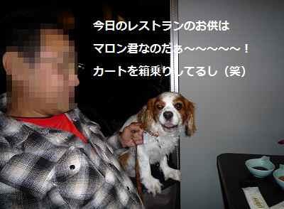 2012_1006_192948-P1150041.jpg