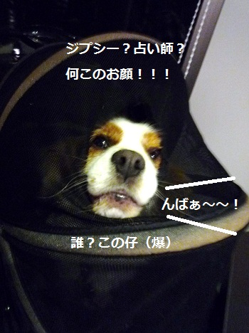 2012_1006_203926-P1150047.jpg