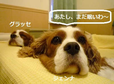 2012_1007_063623-P1150060.jpg