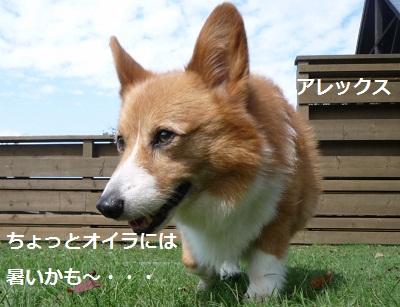2012_1007_122223-P1150120.jpg