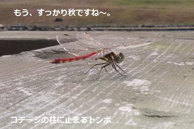 2012_1007_125257-P1150146.jpg