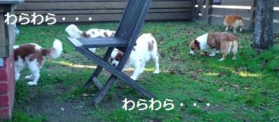 2012_1008_075358-P1150200.jpg
