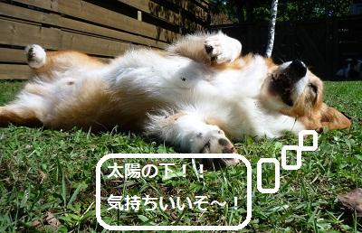 2012_1008_105032-P1150228.jpg