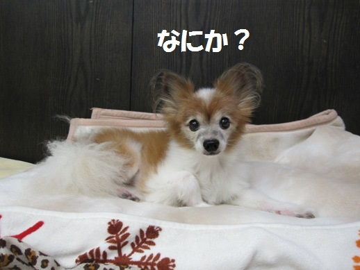 IMG_3016 (gochan)