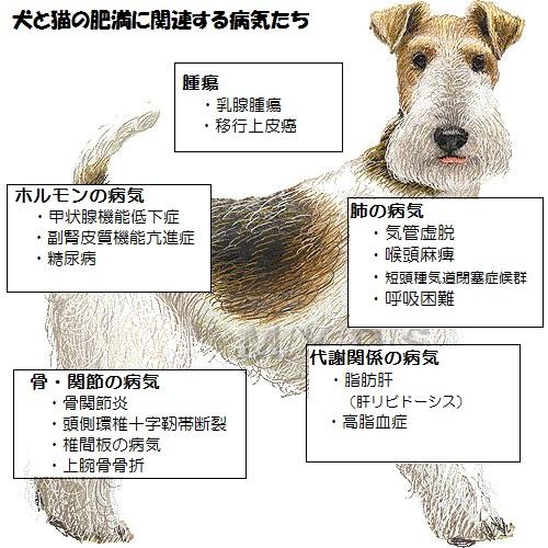dog illust2