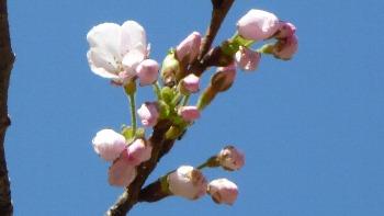 2012/04/04 開花しました。!!