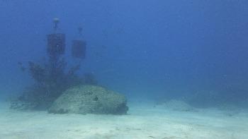 イカの産卵礁
