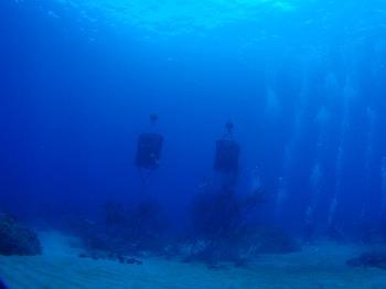 アオリイカの漁礁