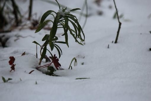雪の日0001_2