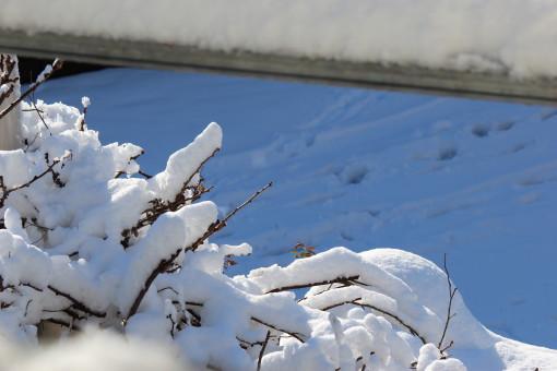 雪の日0001