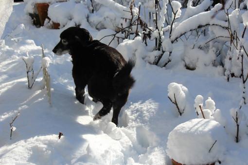 雪の日0001_5