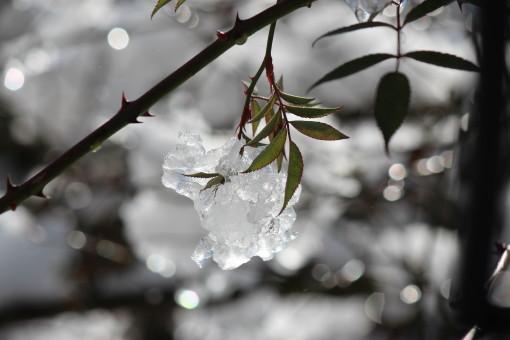 雪の日_0001_1