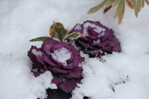 雪の日0001_8