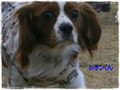 繝ャ繧ェ繝ウ_convert_20121113223734
