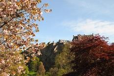 エジンバラ城と桜