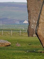 巨石とウサギ