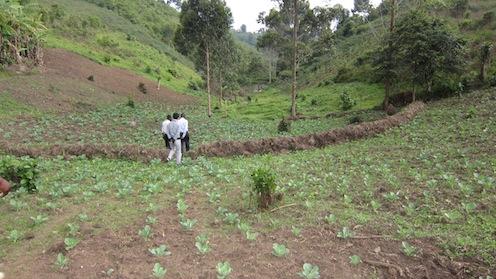 キャベツの種は、昨年の収穫から得たお金で購入したもの。