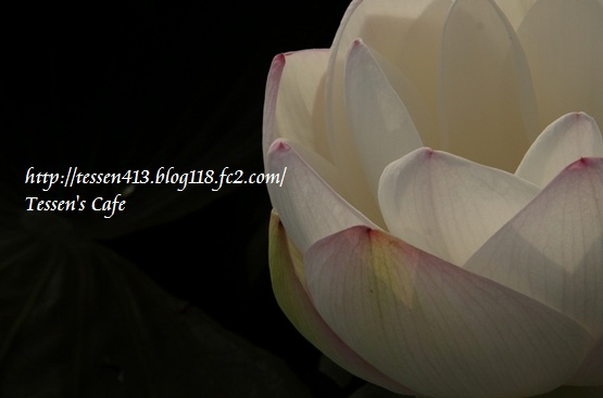 IMG_8481 tc