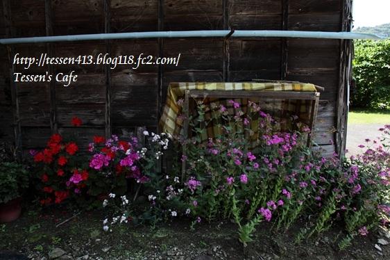 IMG_1273 - コピー