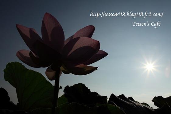 IMG_3446 - コピー